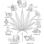 Hemp-Uses-Diagram